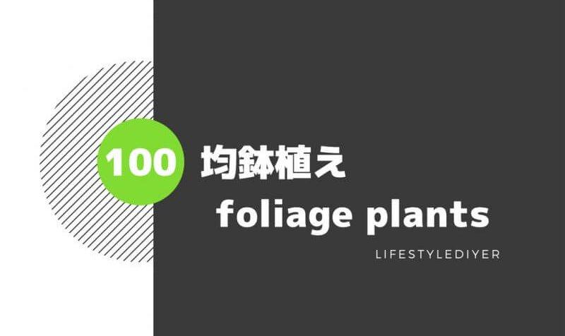 100均植木鉢で観葉植物を100倍おしゃれに飾る方法!